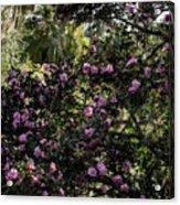 Camellia Tree Acrylic Print