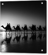 Camels On The Beach Acrylic Print