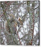 Camera Shy Grey Squirrel Acrylic Print