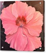 Camilia Acrylic Print