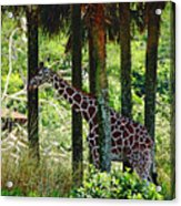 Camouflage Coat Acrylic Print
