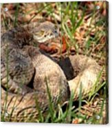 Camouflage Master ... Montana Art Photo Acrylic Print