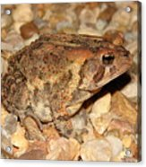 Camouflage Toad Acrylic Print