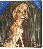 Camp Beagle Acrylic Print