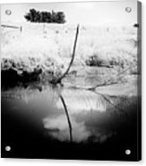 Campaspe River In Black And White Acrylic Print