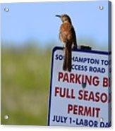 Can I Park Here? Acrylic Print