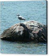Cana Island Wi Acrylic Print