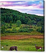 Canaan Valley Evening Acrylic Print