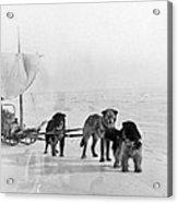 Canada: Dogsledding Acrylic Print
