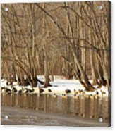 Canada Geese On Concord River Acrylic Print by John Burk