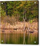 Canada Goose Couple Acrylic Print