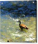 Wildlife Scenes #3 Acrylic Print