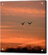 Canadian Geese Morning Flight Acrylic Print