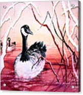 Canadian Geese Sunset Acrylic Print