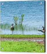 Canadian Geese - Wichita Mountains - Oklahoma Acrylic Print