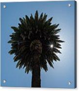 Date Palm Starburst Acrylic Print