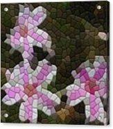 Candy Striped Phlox Acrylic Print