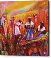 Cane Harvest Acrylic Print