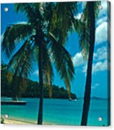 Caneel Bay Palms Acrylic Print by Kathy Yates