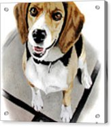 Canine Cutie Acrylic Print