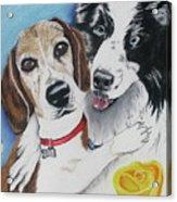 Canine Friends Acrylic Print