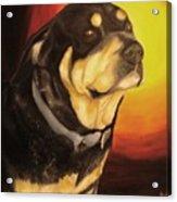 Canine Vision Acrylic Print