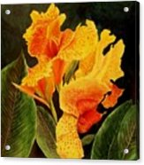 Canna Lilies Acrylic Print by Vickie Voelz