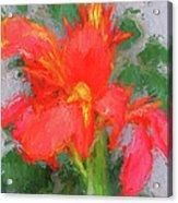 Canna Lily 3 Acrylic Print
