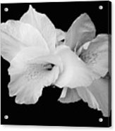 Canna Lily In Black And White Acrylic Print