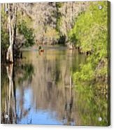 Canoing On Hillsborough River Acrylic Print