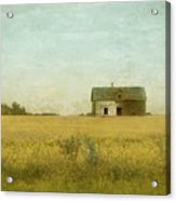 Canola Field Of Dreams Acrylic Print