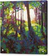 Canopy Acrylic Print