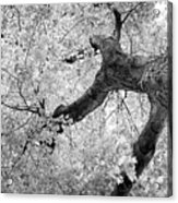 Canopy Of Autumn Leaves In Black And White Acrylic Print