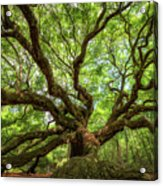 Canopy Of Color At Angel Oak Tree  Acrylic Print