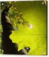 Canopy View Acrylic Print