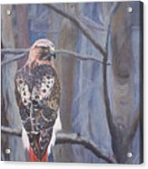 Can't See The Forest For The Trees Acrylic Print by Bill Werle