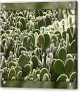 Canvas Of Cacti Acrylic Print