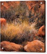 Canyon Grasses Acrylic Print