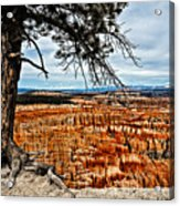 Canyon Overlook Acrylic Print