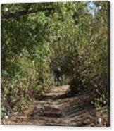 Canyon Path I Acrylic Print