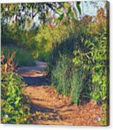 Canyon Path II Acrylic Print