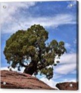 Canyonlands Tree Acrylic Print