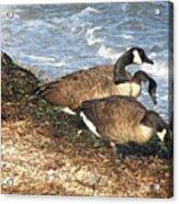 Cape Cod Beachcombers 1 Acrylic Print