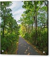 Cape Cod Rail Trail Trees Eastham Ma 2 Acrylic Print