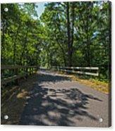 Cape Cod Rail Trail Trees Eastham Ma Fence Acrylic Print