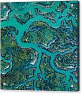 Capillaries Acrylic Print