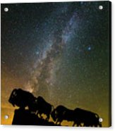 Caprock Canyon Bison Stars Acrylic Print