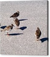 Captiva Birds 2 Acrylic Print