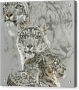 Captivating Acrylic Print