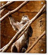Captivity Acrylic Print